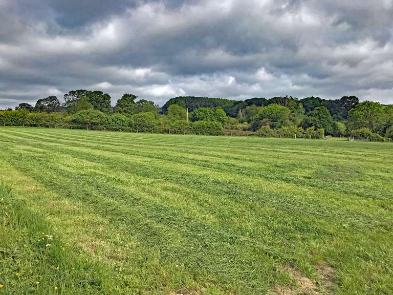Newly cut grass for silage