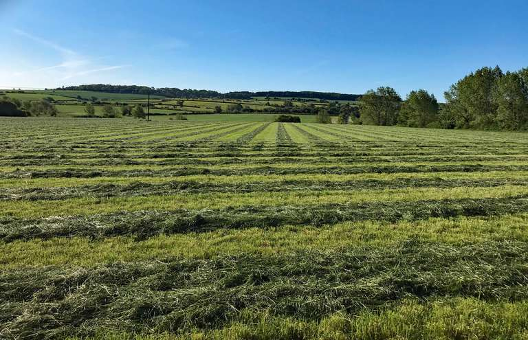 Newly cut hay, looking towards Chilson