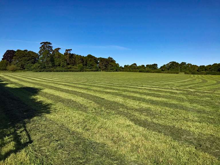 Newly cut hay, looking towards Pudlicote House