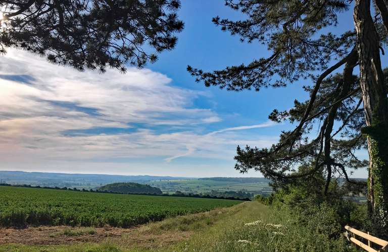 View from the Scots pines towards Charlbury