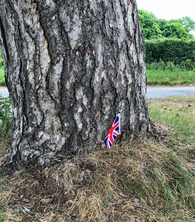 Union flag planted at the Scots pine trees to mark the top of Everest