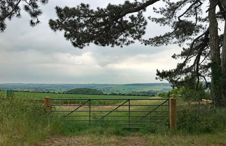 From the Scots pines towards Charlbury